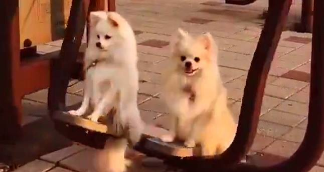 Dog Swings Are the Best
