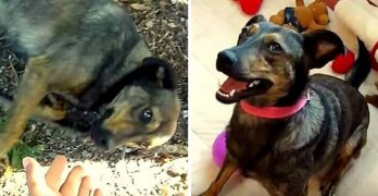 Friendly Homeless Dog Gets Rescued