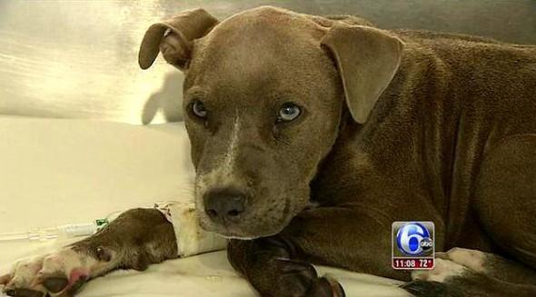 9.23.15 - Puppy Found in Duffel Bag2