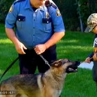 Nine-Year-Old Spends Birthday Money on Bulletproof K-9 Vest