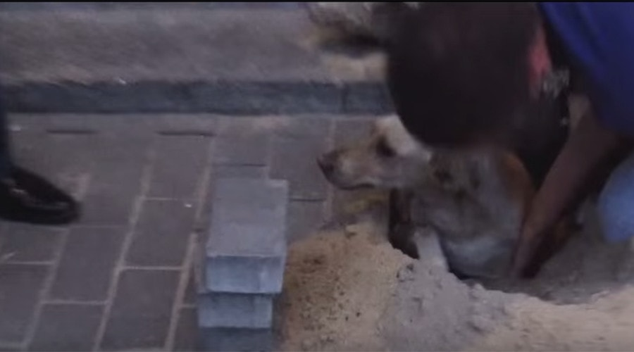 Pregnant Dog Rescued After Two Days Buried Alive