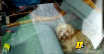 Dog Left in Car for Two Days Is Rescued Alive