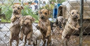 23 Dogs Taken from Alleged Dog Fighting Property