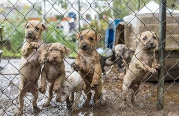 9.30.15 - rescued dogs