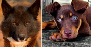 Dogs with Gorgeous Eyes