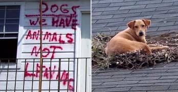 How Hurricane Katrina Is Saving Pets' Lives