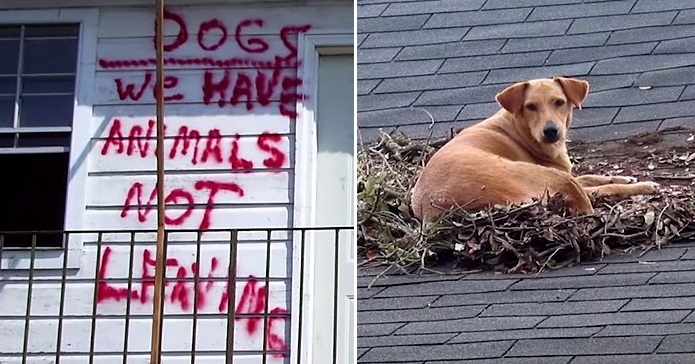 Dog Blanket For Car >> How Hurricane Katrina Is Saving Pets' Lives