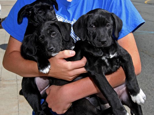 Petsmart Kicks Rescue Group Out Of Store