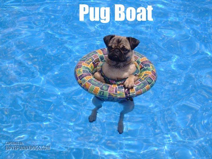 Some Of The Best Dog Puns Of All Time Life With Dogs
