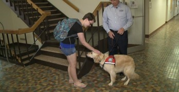 Concordia University Gets Comfort Dog for Campus