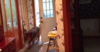 Dog Thinks He's a Door Man