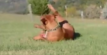 Super Excited Dog Runs Circles Around His Humans