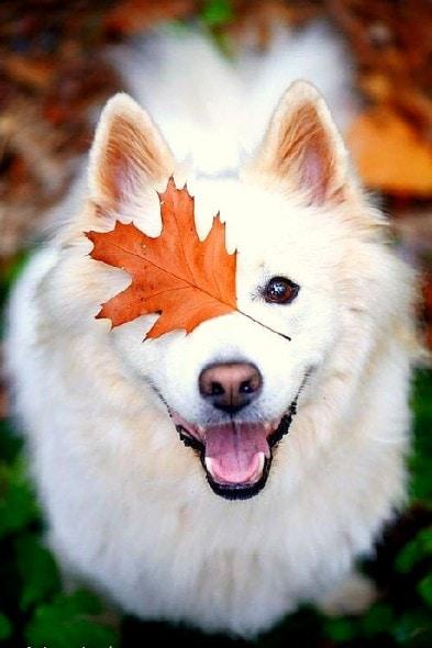 10.10.15 - Dogs Loving Autumn12