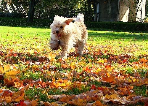 10.10.15 - Dogs Loving Autumn13