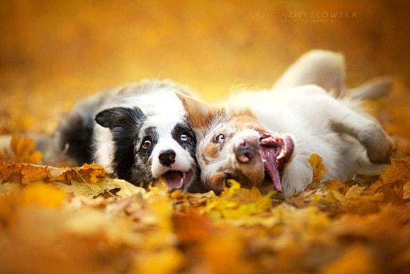 10.10.15 - Dogs Loving Autumn15