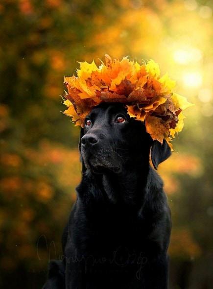 10.10.15 - Dogs Loving Autumn17