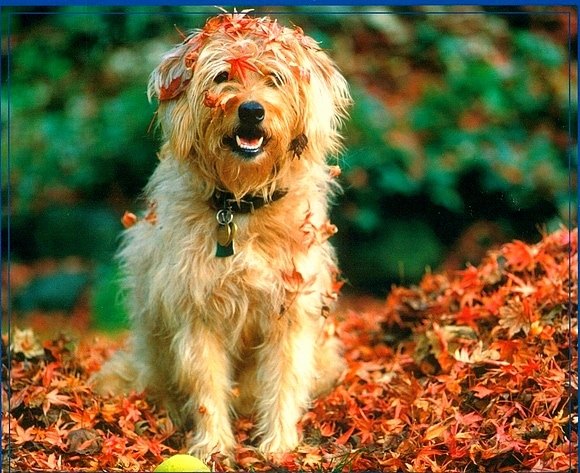 10.10.15 - Dogs Loving Autumn18