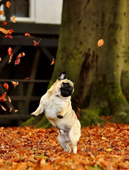 10.10.15 - Dogs Loving Autumn19