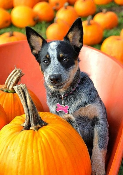 10.10.15 - Dogs Loving Autumn20