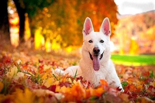 10.10.15 - Dogs Loving Autumn21