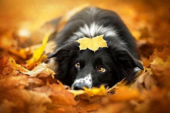 10.10.15 - Dogs Loving Autumn22
