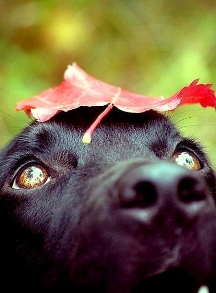 10.10.15 - Dogs Loving Autumn24