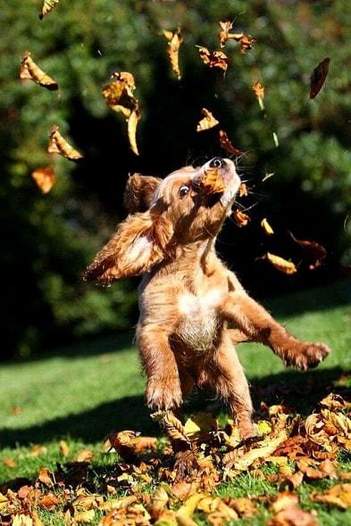 10.10.15 - Dogs Loving Autumn25