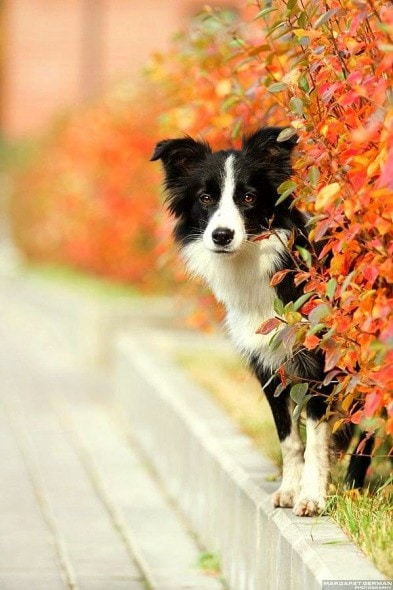 10.10.15 - Dogs Loving Autumn3