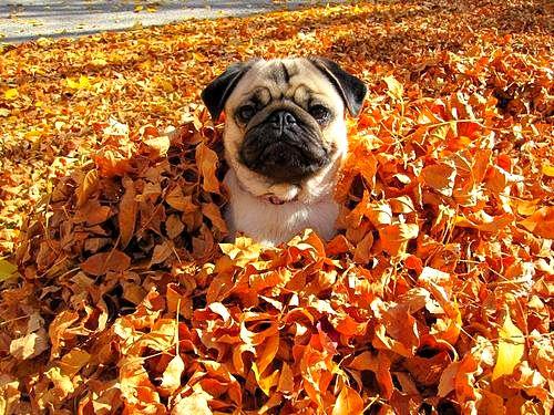 10.10.15 - Dogs Loving Autumn4