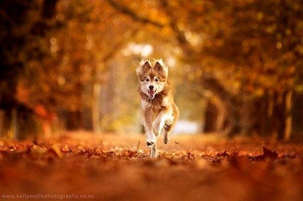 10.10.15 - Dogs Loving Autumn9