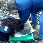 Frozen Wolf Revived by CPR from Incredibly Brave Heroes
