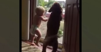 Dog & Baby Have Identical Reaction to Seeing Dad Come Home