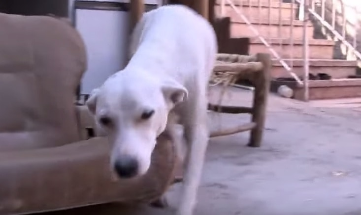 Man Rescues Puppies After Disaster In Dominican Republic