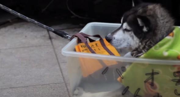 10.13.15 - dog box5
