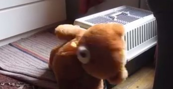 Dog Tries to get His Teddy into his Crate