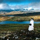 10.15.15 - Man Quits Job to Travel Norway with Dog1