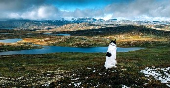 Man Quits His Job to Explore Norway with His Dog