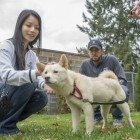 Canadian Couple Adopt a Dog Rescued from Korean Dog Meat Farm