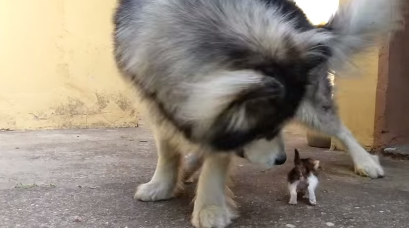 Dog Is Confused by the Newest Addition to the Family