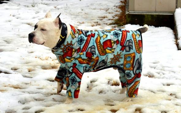 10.2.15 - Pit Bulls in Pajamas8