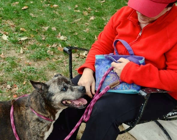 10.2.15 - UPDATE - 11-Year Shelter Dog Olive Finally Adopted3