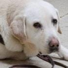 Facebook Helps Reunite Blind Man with Missing Service Dog