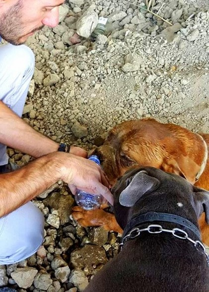 10.21.15 - Dog Buried Alive Has Been Adopted2