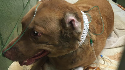 Dog runs back into burning home to rescue a 69 year old man