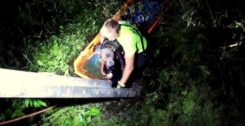 Deputies & Firefighters Save Pit Bull Thrown in Gator Swamp