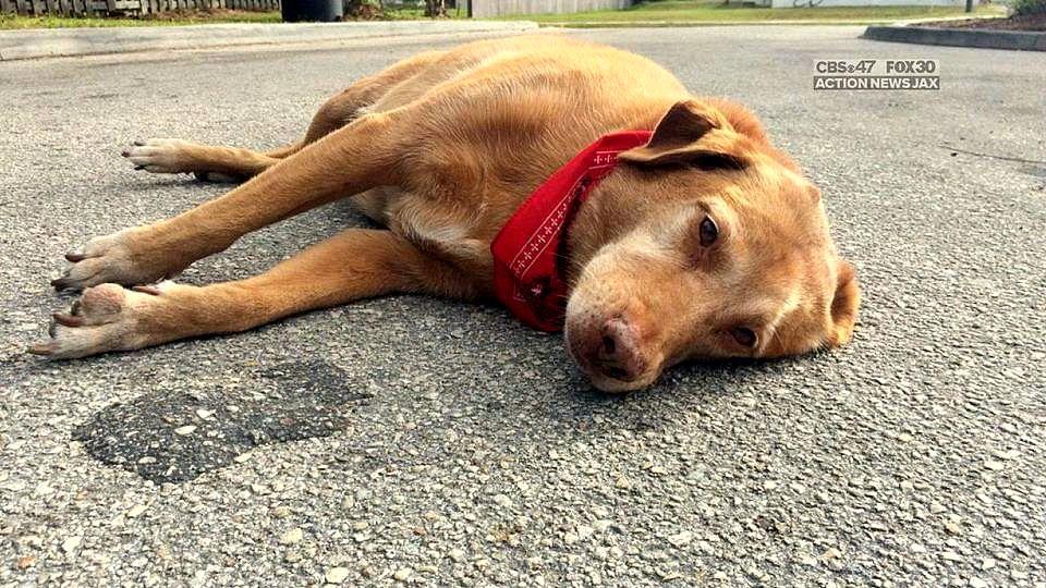 Heartbroken Dog Refuses to Leave Deceased Owner's Side