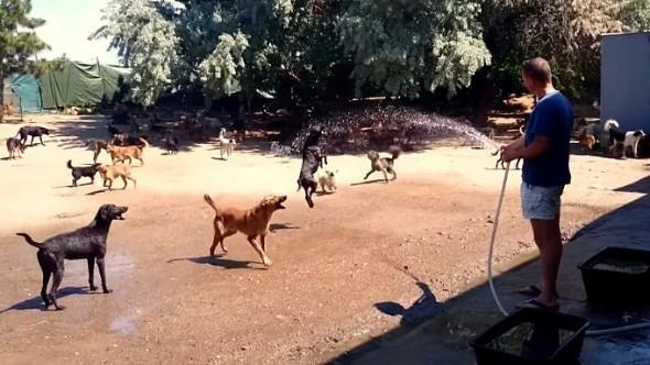10.24.15 - 450-Dog Sanctuary1