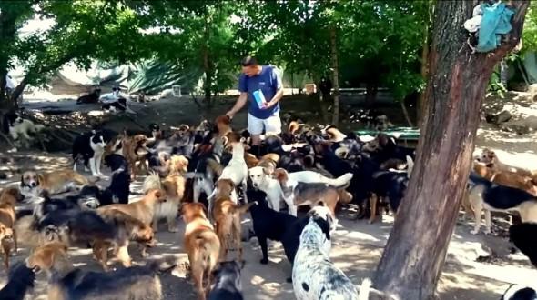 10.24.15 - 450-Dog Sanctuary2