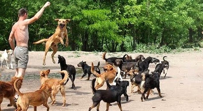 Heaven Is a Place on Earth – in a 450-Dog Sanctuary!