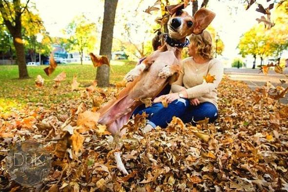 10.24.15 - Dog Pulls Off Epic Engagement Photobomb1